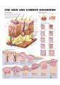 Medical and Anatomical Charts 50