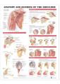 Medical and Anatomical Charts 30