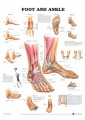 Chiropody & Podiatry - Nursing & Ancillary Services - Medicine - Non Fiction - Books 8