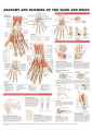 Anatomy Books & Flash Cards 36